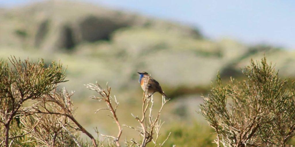 avistar aves en Sierra de Gredos